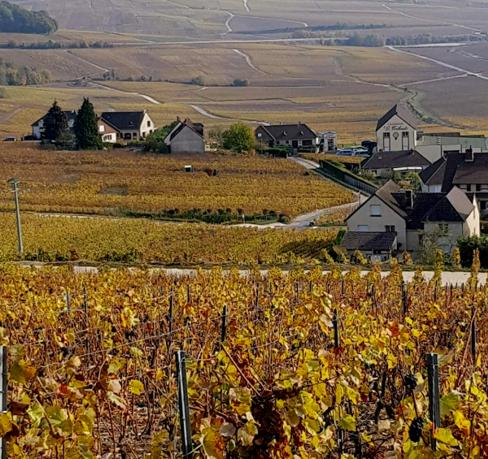19 Champagne Vignoble Hatvillers Epernay Automne