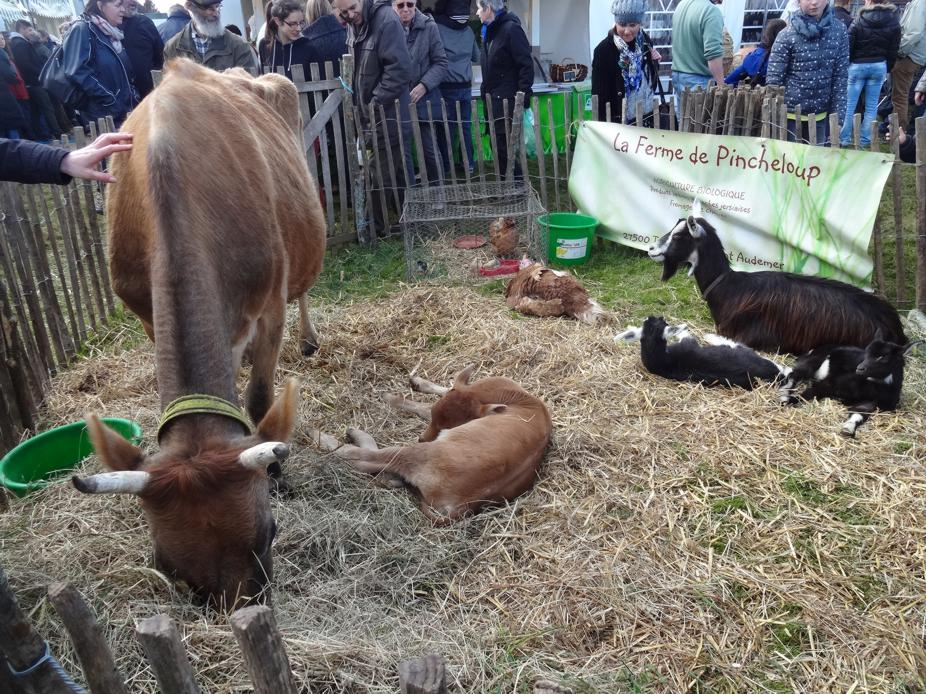 16 Festival Orties Folies Animaux