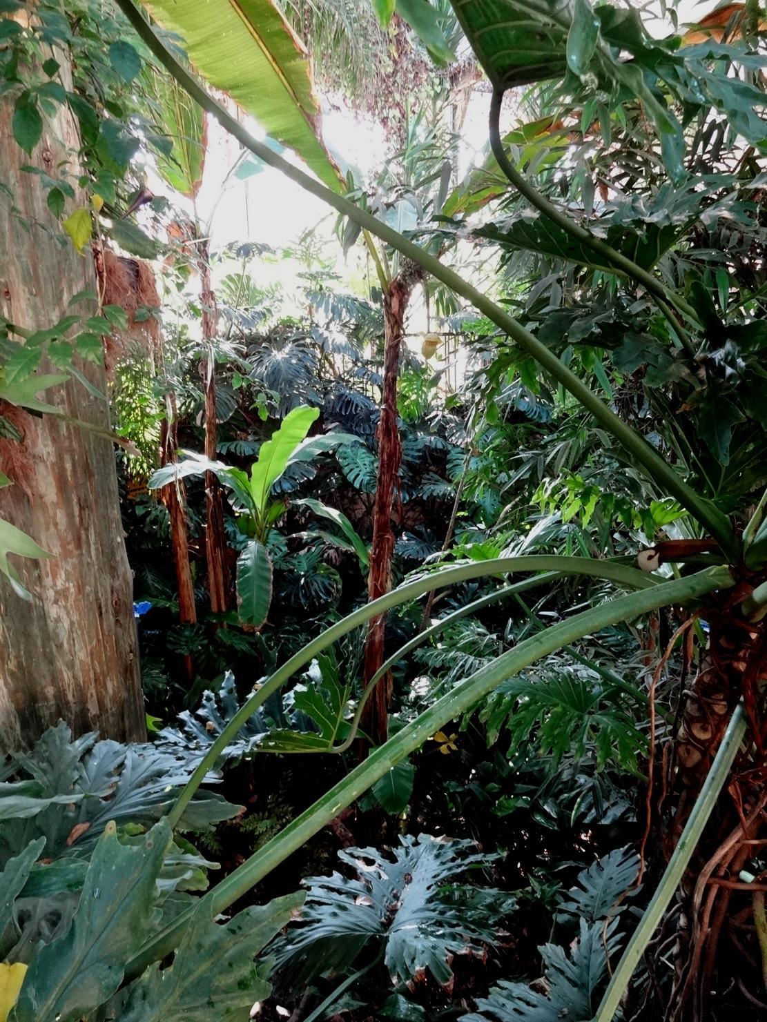 19 Chaumont sur Loire Pavillon plantes Zoom