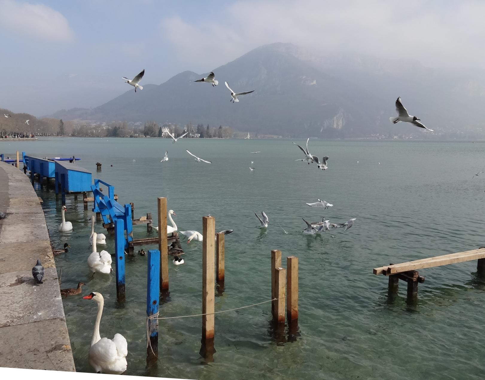 18 Annecy Mouettes