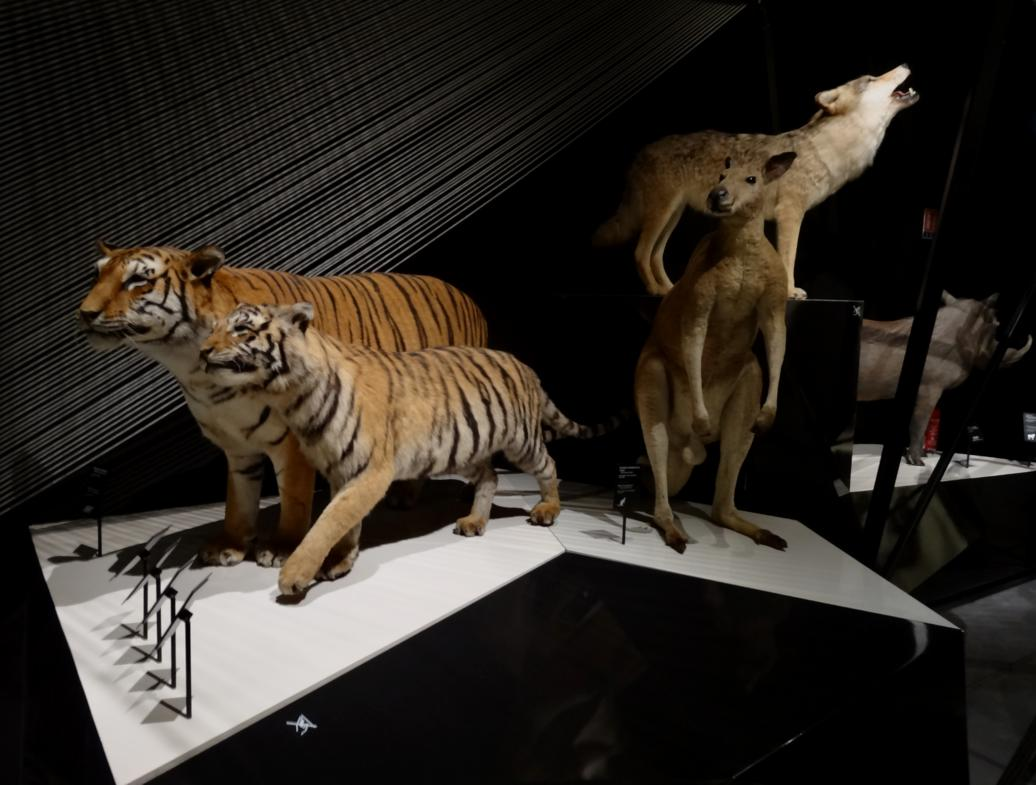16 Musee Confluences Sculpture Tigres
