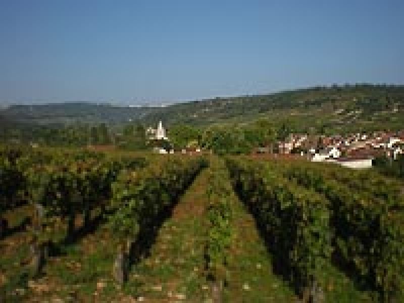Domaine Lafouge